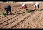La Cooperativa Sociale Tau, che si occupa dell'Orto Sociale san Lazzaro, ha concorso per il completamento del progetto che prevede la realizzazione di una Fattoria Multifunzionale in cui impiegare indigenti […]